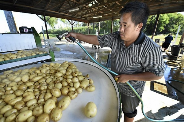 Hmong farmers work to get in Twin Cities stores and schools