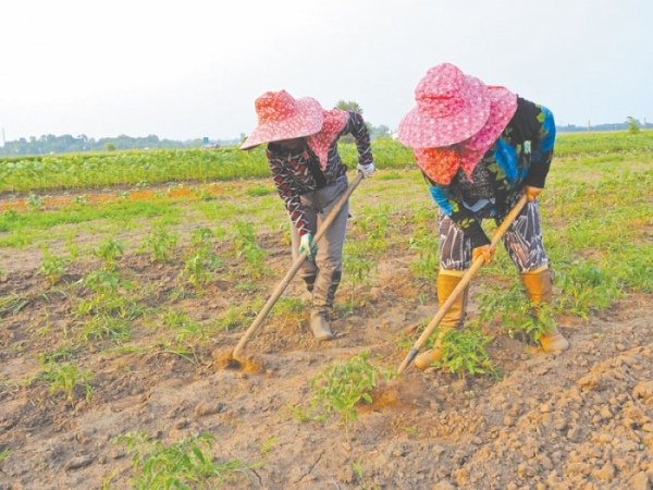Hmong farmers growing their future