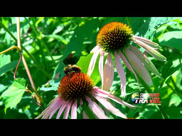 SUAB HMONG TRAVEL:  Nature Beauty at Witnall Park, Wisconsin
