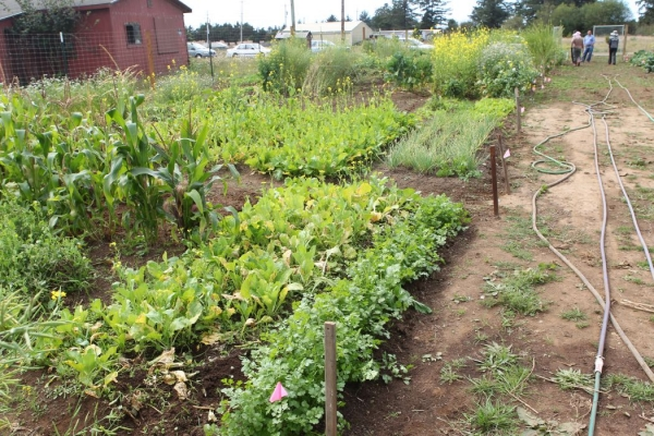 A community garden in Crescent City provides a space to raise food important to Hmong culture, similar to what is hoped